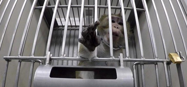 O terrível laboratório alemão onde animais estavam sendo torturados em 2019