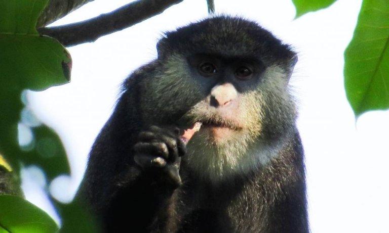 Cientistas se surpreendem com macacos assassinos de ratos