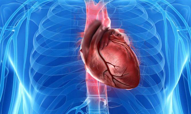 Por que você nunca ouve falar em câncer no coração?