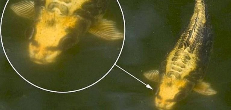 Peixe com rosto incrivelmente humano é flagrado na China