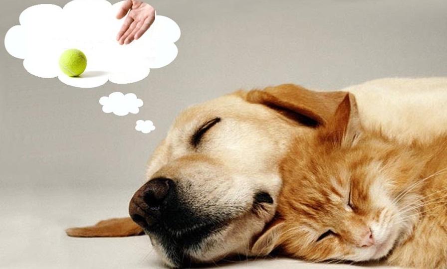 Como é o sonho dos animais?