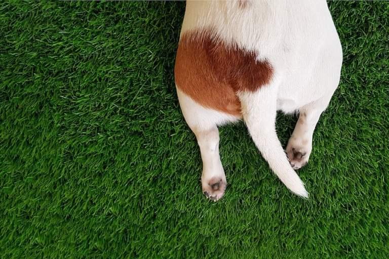 7 coisas que você não sabia sobre o rabo do seu cachorro