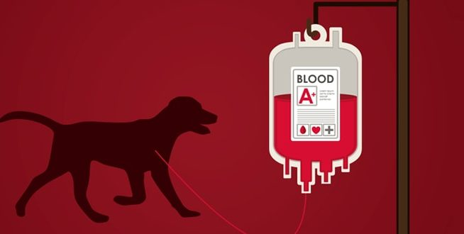 Cães e gatos possuem tipos sanguíneos diferentes como os humanos?