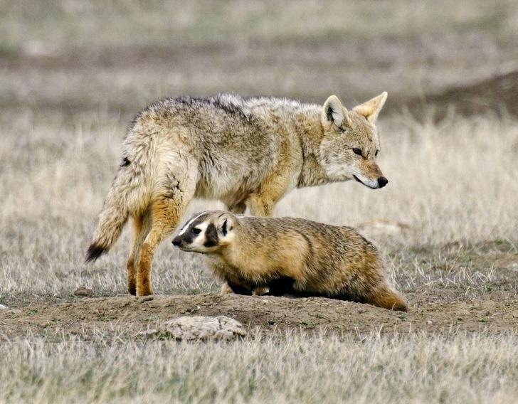 7 cooperações mais bizarras entre espécies de animais diferentes