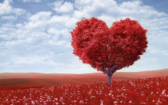 Por que o coração não descansa como os demais músculos do corpo humano?