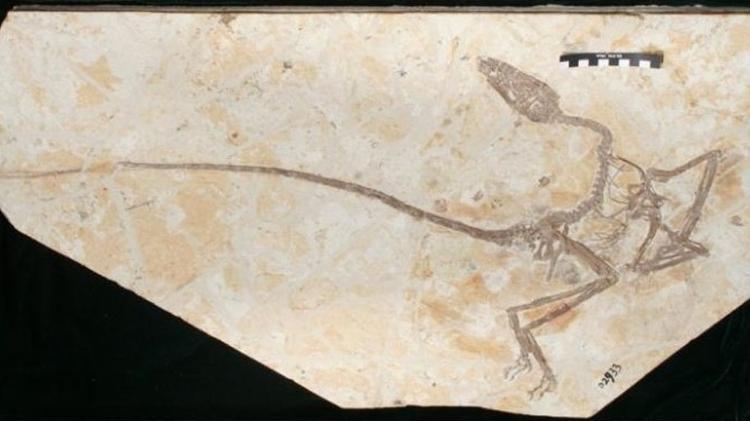 """Encontrado o fóssil do """"Dragão Dançarino"""""""