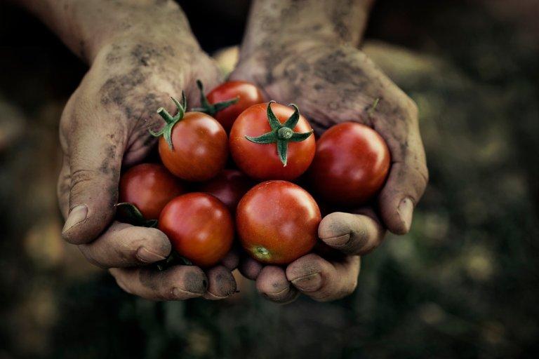 Entenda como é possível alimentar 10 bilhões de pessoas sem destruir o planeta