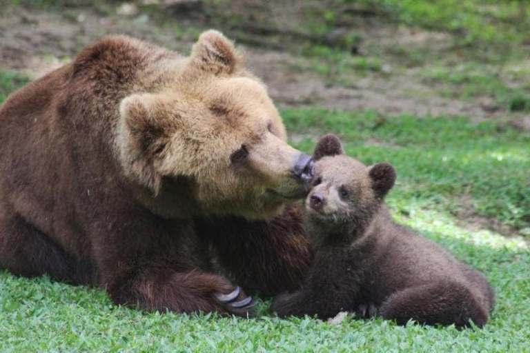 """Entenda como alguns mamíferos conseguem """"pausar"""" a gravidez"""