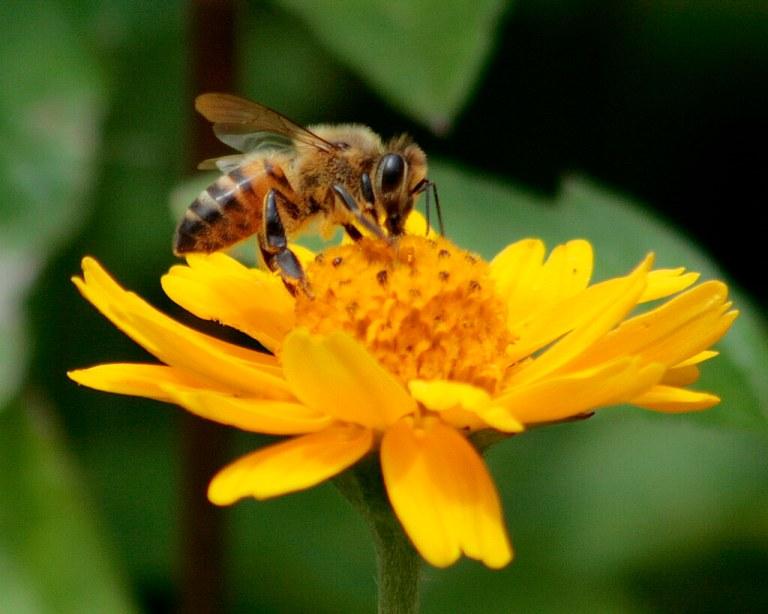 Segundo estudo, meio bilhão de insetos estão sendo ameaçados de extinção