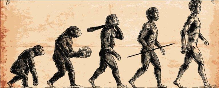 A imagem que todos usam para mostrar a evolução humana está errada
