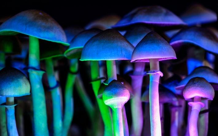 """Cientistas descobrem como cogumelos mágicos são """"botão de reset"""" do cérebro"""