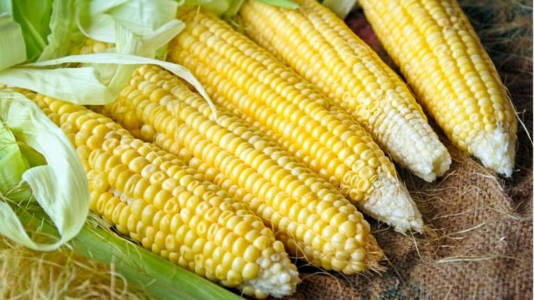6 fenômenos naturais bizarros de comidas do seu dia a dia