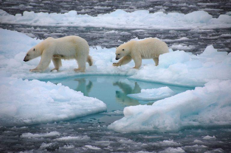 Estudo assustador diz quando o gelo do Ártico chegará ao fim