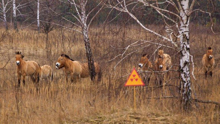 Conheça o mistério por trás dos cavalos selvagens de Chernobyl