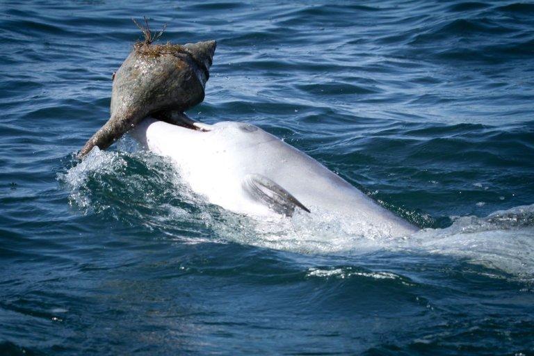 Essa forma que os golfinhos comem é surpreendente, mas como eles aprendem é mais ainda