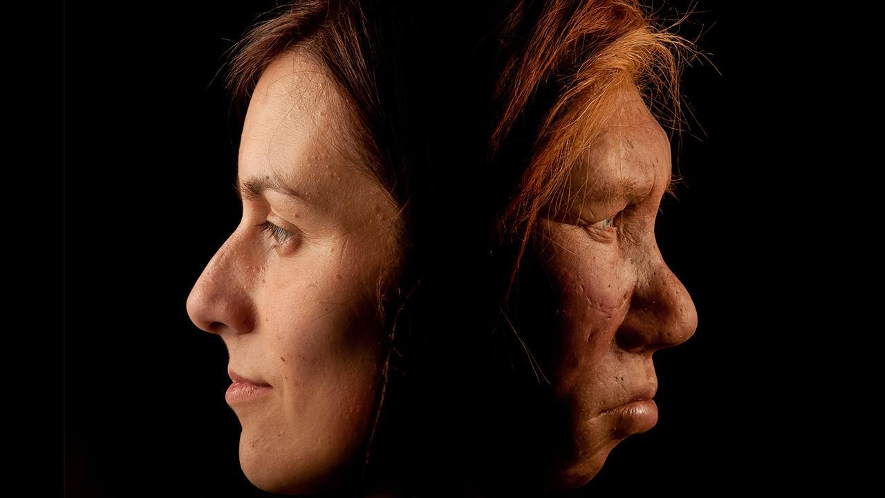 Quem são mais parecidos entre si: neandertais ou ursos polares?