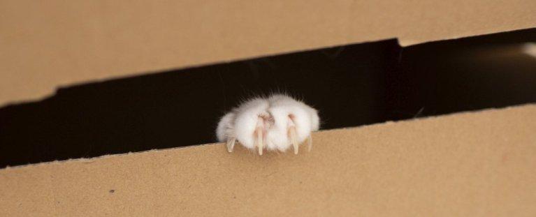 Físicos pensam ter achado uma forma de salvar o gato de Schrödinger
