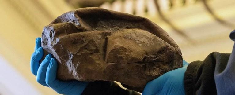A qual animal pertencia esse ovo misterioso achado na Antártica?