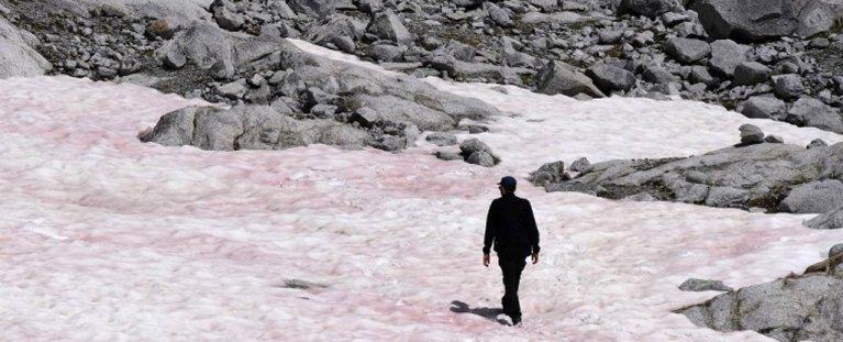 Neve rosa na Europa pode ter consequências terríveis