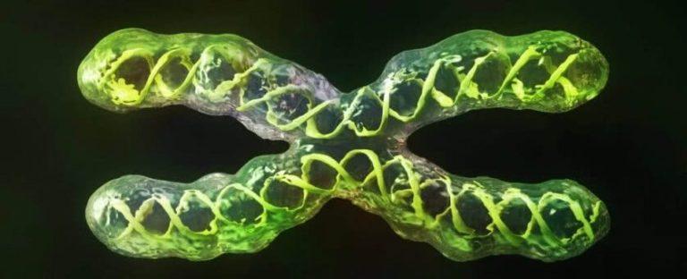 Cientistas finalmente conseguiram sequenciar um cromossomo humano completo