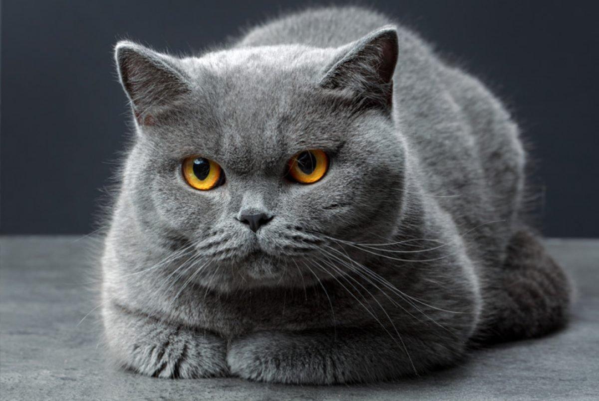 Entenda 6 comportamentos do seu gato e o que eles querem dizer