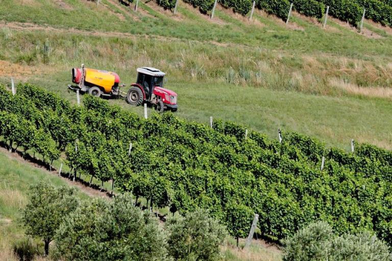 Essa pode ser uma alternativa sustentável no lugar de agrotóxicos para as plantações