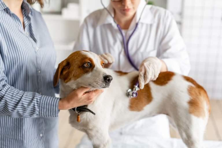 10 sinais que seu cachorro pode estar com câncer