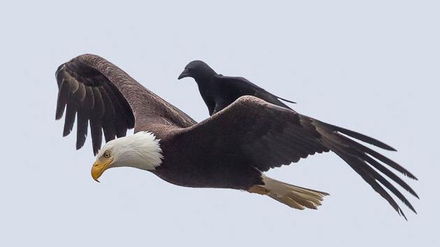10 registros de animais pegando carona com outros