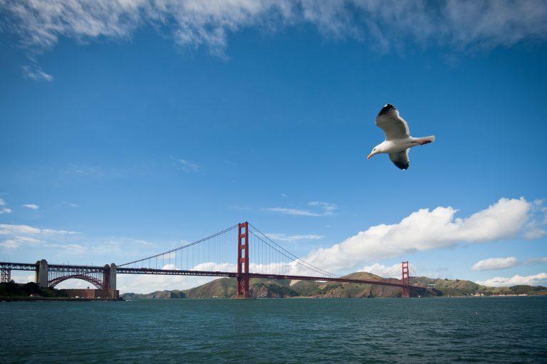 Os pássaros de São Francisco começaram a cantar diferente durante o lockdown