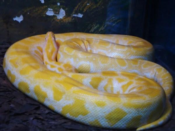 Cobras 3 600x450, Fatos Desconhecidos