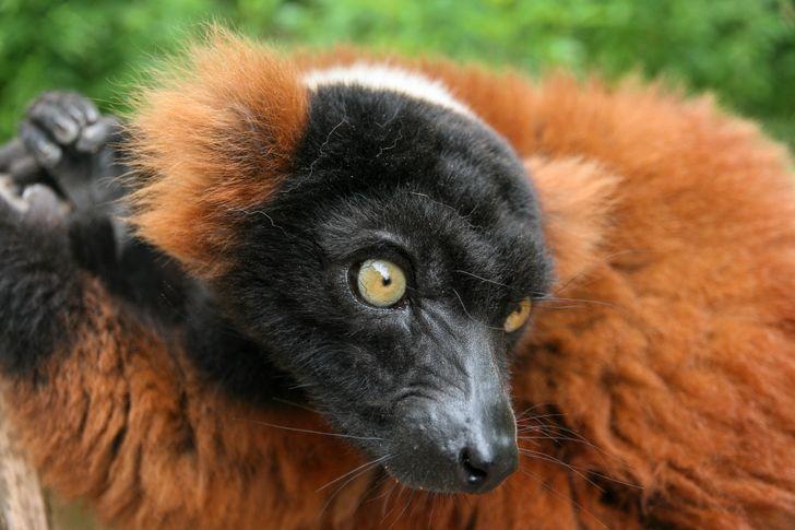 7 animais que provaram que a natureza é uma imensa caixa de surpresas