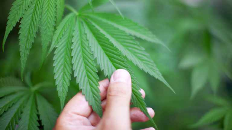 7 crimes terríveis ligados à marijuana