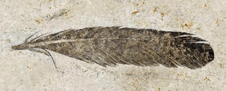 Pena fóssil mais antiga do mundo foi encontrada