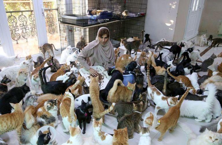 Mulher divide casa com 480 gatos e 12 cães