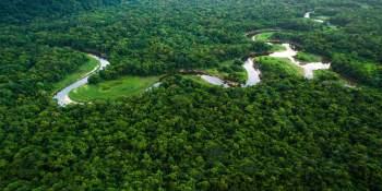 capa do post Principal motivo das mortes de árvores na Amazônia foi descoberto