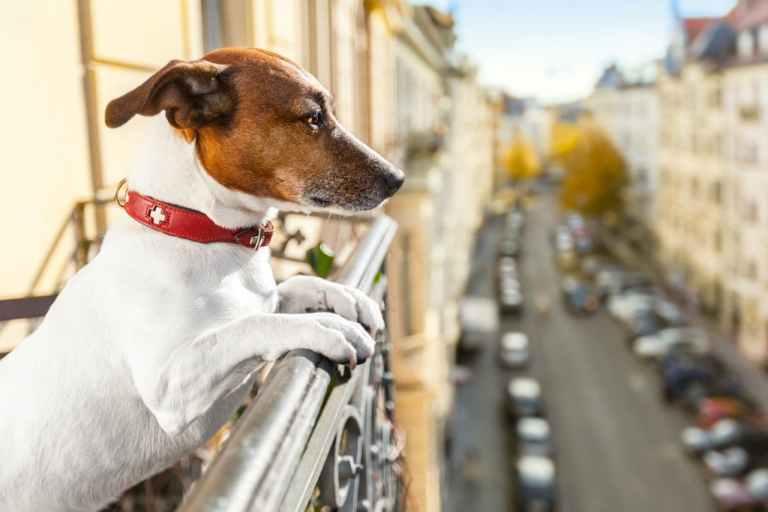 7 dicas para ajudar a criar cachorros em apartamento