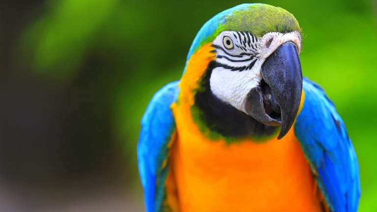 Papagaio salva dono de incêndio na Austrália