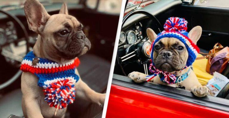 Cão torna-se prefeito em uma pequena cidade americana de Kentucky