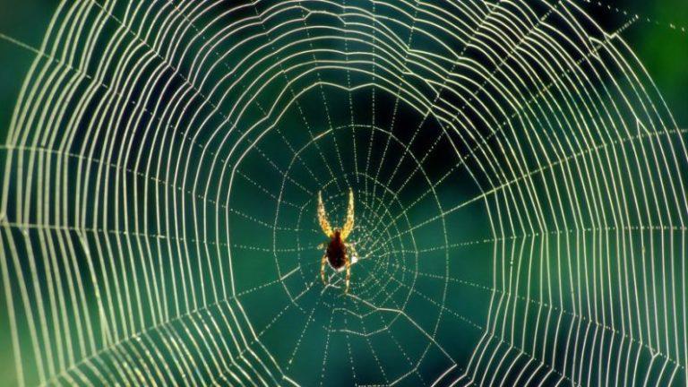 Aranhas no espaço mostram coisas estranhas que acontecem com as teias em microgravidade