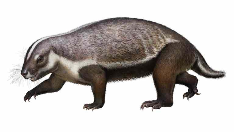 Besta louca, que viveu entre os dinossauros, quebrou as regras da evolução