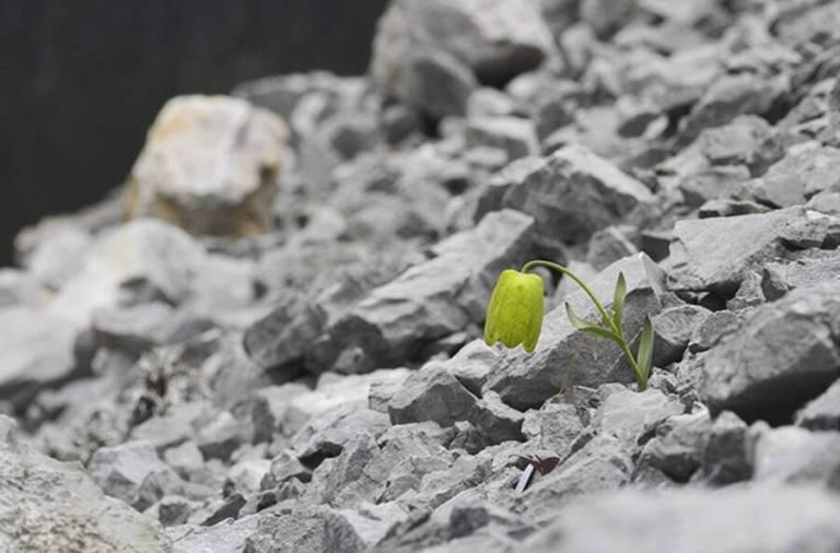 Planta evolui para se esconder dos seres humanos