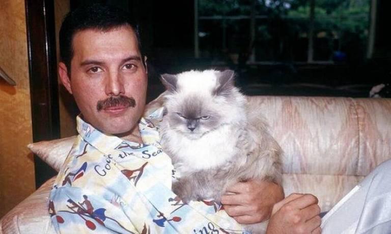Fotos raras de Freddie Mercury e seus gatos são de derreter o coração