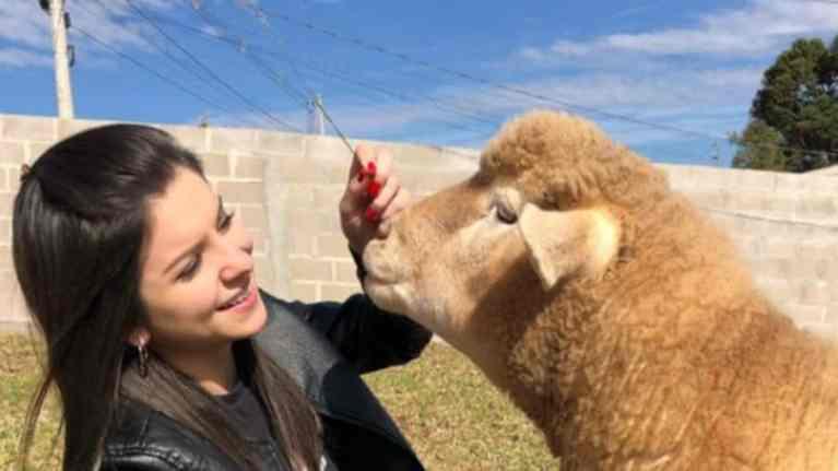 Conheça Chanel, uma ovelha de estimação