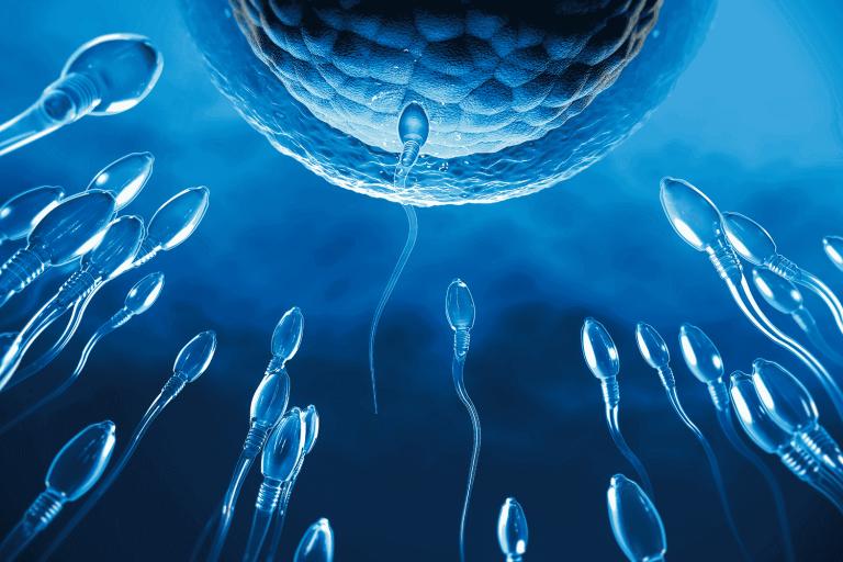 Em ratos, espermatozoides foram vistos envenenando outros para se beneficiar