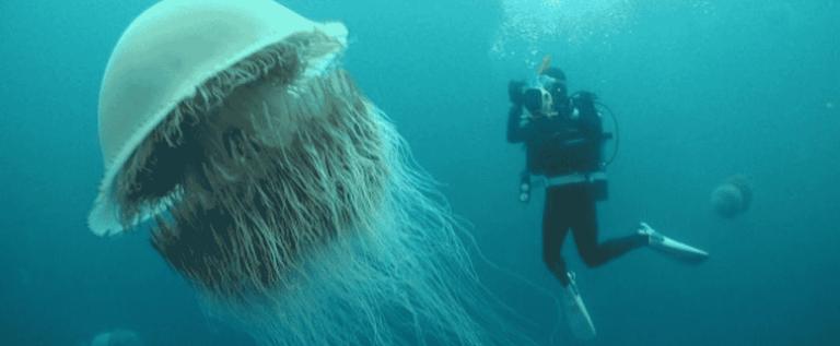 7 motivos para não entrar em águas desconhecidas