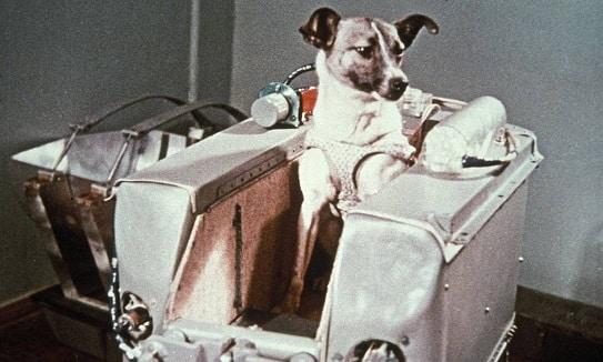A curiosa equipe de criaturas que esteve a bordo do Sputnik 9