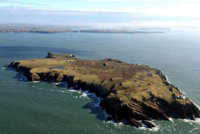 Coelhos de uma remota ilha de Gales descobrem artefatos de 9.000 anos