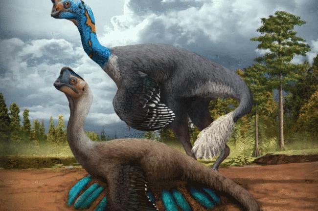 Fossil2, Fatos Desconhecidos