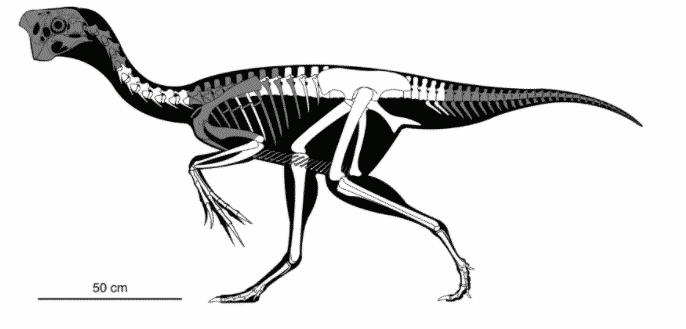 Fossil3, Fatos Desconhecidos