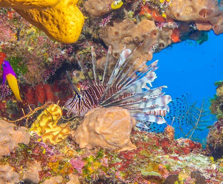 7 provas de que o fundo do mar pode ser um universo paralelo